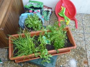 La brouette et les herbes aromatiques.