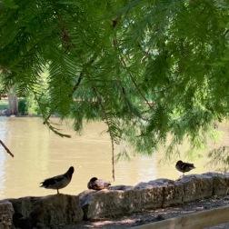 parcolbiusriquiercanards_rivieramum