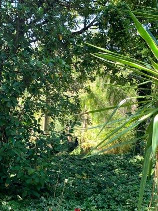 végétationolbiusriquier_Rivieramum